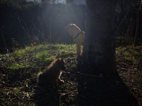 http://lovely.cowblog.fr/images/DSCI0015.jpg